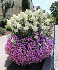 103 best container garden recipes images on pinterest proven