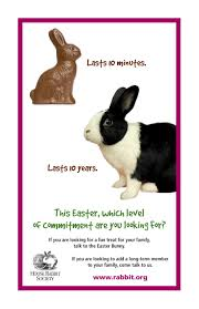 bunnies for easter 10 reasons to not buy rabbits for easter
