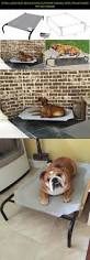 Clamshell Dog Bed by Best 25 Large Dog Beds Ideas On Pinterest Large Dog Bed Diy