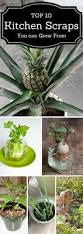 31 best images about gardening on pinterest vegetables growing
