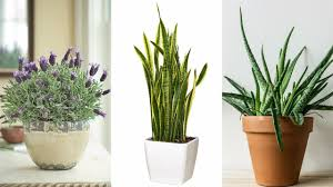 nasa recommends having these plants in your house to purify the