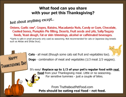 your thanksgiving about pet food