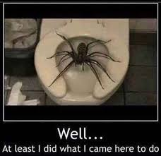 Funny Spider Meme - funny spider memes info