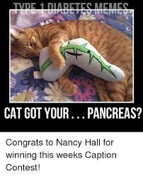 Diabetes Cat Meme - 25 best memes about type 1 diabetes and cats type 1 diabetes