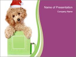 poodle puppy in christmas hat powerpoint template u0026 backgrounds id