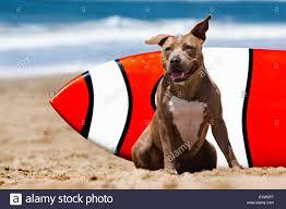 medium sized dog stock photos u0026 medium sized dog stock images alamy