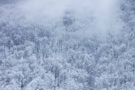 free picture snow winter cold mountain wood tree landscape