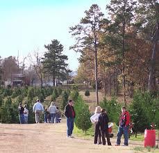 motley u0027s christmas tree farm and wreaths little rock arkansas