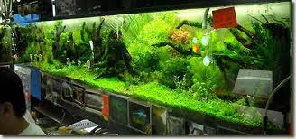 tank nature aquarium takashi amano one shop is specialized