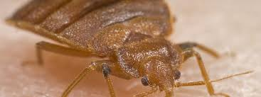 The Best Way To Kill Bed Bugs The Best Ways To Get Rid Of Pesky Bed Bugs In Your Home Color Fool