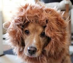 Fur Halloween Costumes Lion Mane Dog Costume Version 2 Sewing Crafts