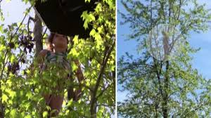 watch rescued from top of 40 foot tree by firefighters
