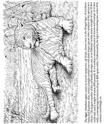 coloring pages of tigers 20 best big cat coloring pages images on pinterest coloring