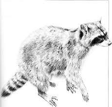 drawing small animals pencil drawing joshua nava arts