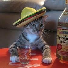 Mexican Sombrero Meme - hispanic meme cat with sombrero