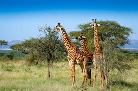 safari jeep craft tanzania trek and safari wild women expeditions