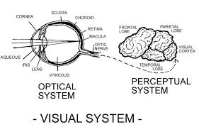 Legally Blind Definition Preschool Children With Visual Impairments By Virginia Bishop