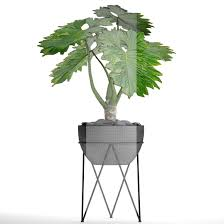philodendron philodendron 2 3d cgtrader