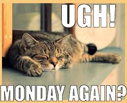 Monday Cat Meme - great cats be funny blog