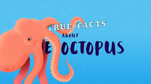 true facts about the octopus motion graphics project the rookies