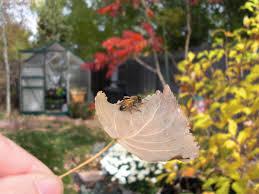 backyard bee hive blog october 2010
