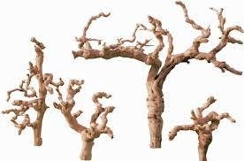 decorative tree branches grapewood branches sandblasted grape wood