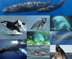 3000 leagues in search of mother cetacea wikipedia