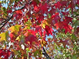 free halloween screensavers free spring screensavers wallpaper wallpapersafari