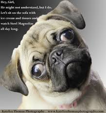 Birthday Pug Meme - i just love her expression it reminded me of the willie wonka