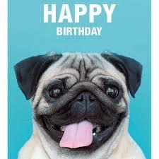 Funny Animal Birthday Memes - funny happy birthday memes home facebook