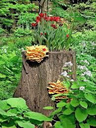 19 blazing tree stump planter ideas that u0027ll impress you balcony