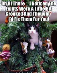 cat in tree meme jokes memes pictures