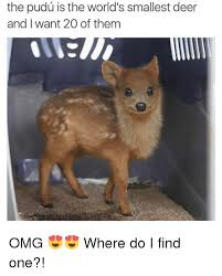 Deer Meme - the pudu is the world s smallest deer and i want 20 of them omg