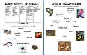 science worksheets animals and their characteristics free