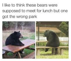 Bear At Picnic Table Meme - bear picnic table inspiration bears tables lunch wrong park