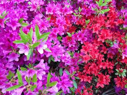 Flowers Near Me - spring in korea wan der lust