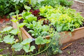 a growing business is like a growing vegetable garden