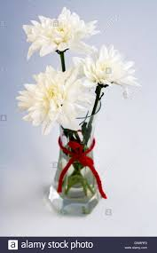 White Roses In A Vase White Flowers In A Small Glass Vase With A Red Bow Stock Photo