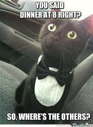 Cat In Suit Meme - 216 best cats in cotumes images on pinterest ha ha funny things