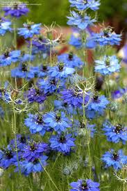 texas native plants list 245 best helen o u0027donnell u0027s plant list images on pinterest plant
