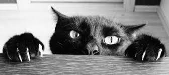 eviter griffes canapé pourquoi les chats font ils leurs griffes