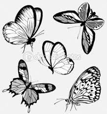 butterfly clipart explore pictures