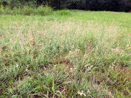 native oklahoma plants native plants eco landscaping