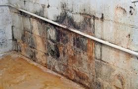 basement mold remediation maryland washinton dc
