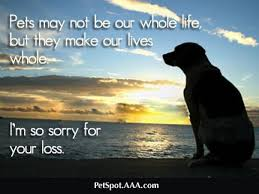 condolences for loss of pet 25 best pet sympathy quotes on dog loss rainbow 447916