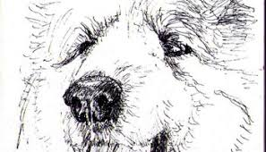 logan the dog pencil drawing one drawing daily