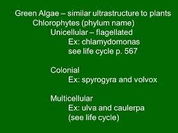 plant ancestry 1 red algae u2013 phycoerythrin pigment ppt download