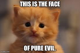 Evil Cat Meme - pin by miisha bangiya on humour pinterest humor
