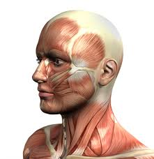 Human Anatomy And Physiology Courses Online Anatomy And Physiology Online Diploma Cambridge Of