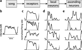 nonlinear computations underlying temporal and population